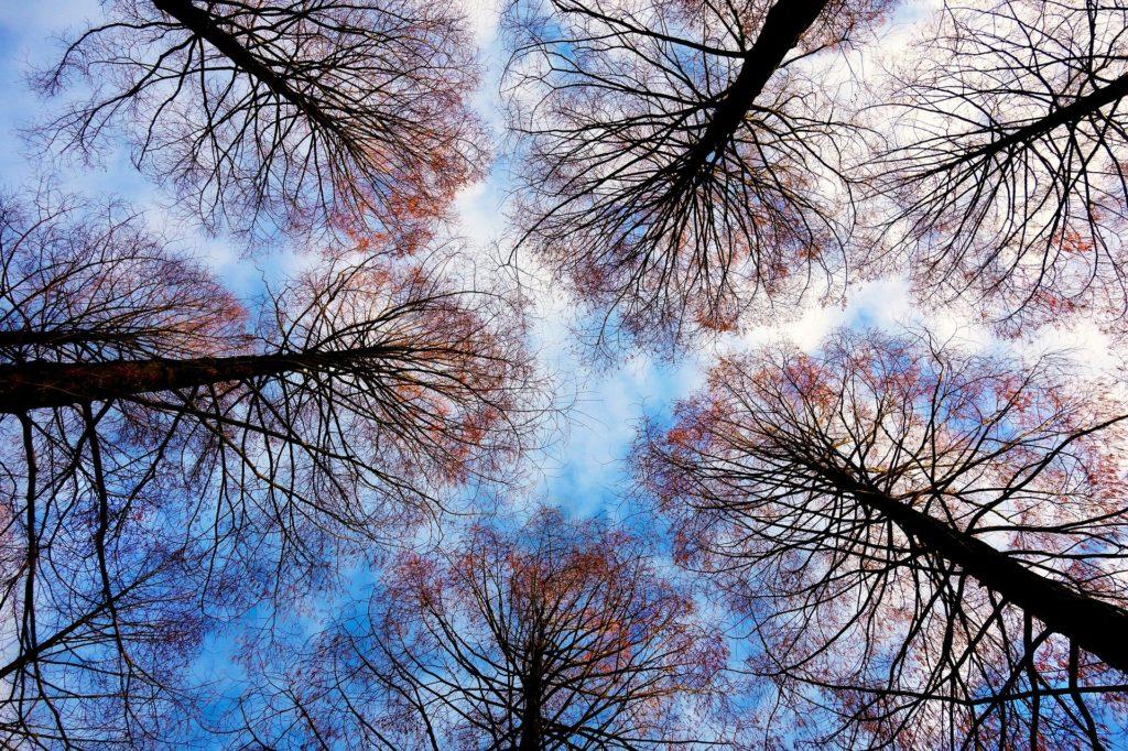 Arboriculture : les dangers du travail en hauteur