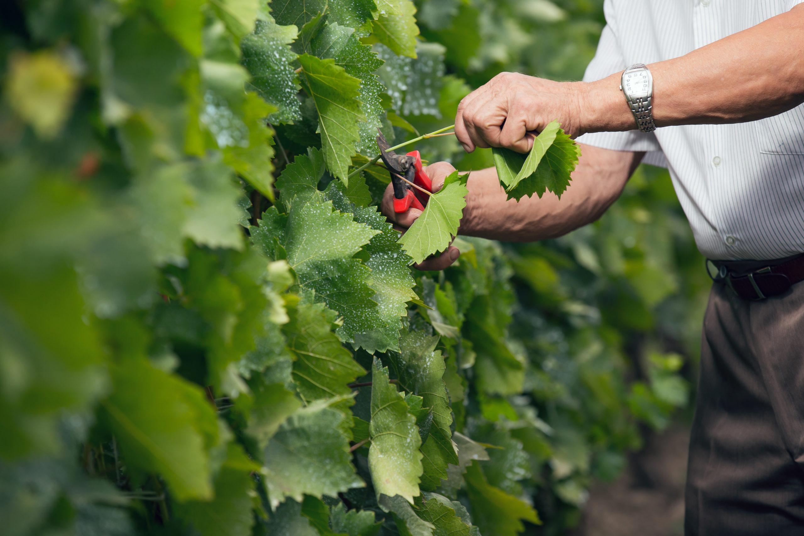 Au cœur d'enjeux environnementaux, les bienfaits de l'agriculture paysanne